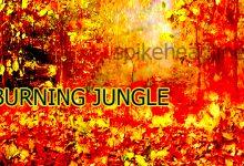 burning-jungle shimilipal