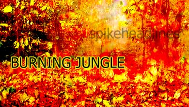 burning-jungle shimilipal