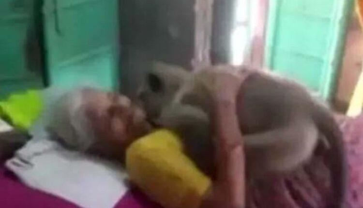 the monkeya nd the oldwoman